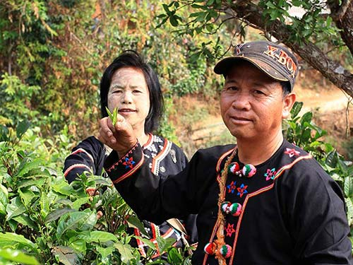 Lahu couple in a tea plantation.